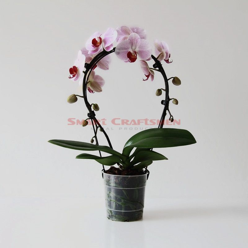 Orchid Wire Support